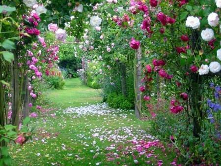 Ce qu'a apporté Jesus/Christ sur terre semble unique, rare et précieux Roses-samode-serge-airoldi-L-4FSy3S