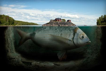 Eric_Johansson_poisson_iceberg