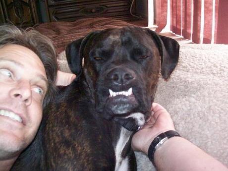 Good as... Classement des plus beaux sourires canins