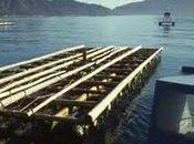 PlaNet Finance récolte fonds pour sauver huîtres Japon