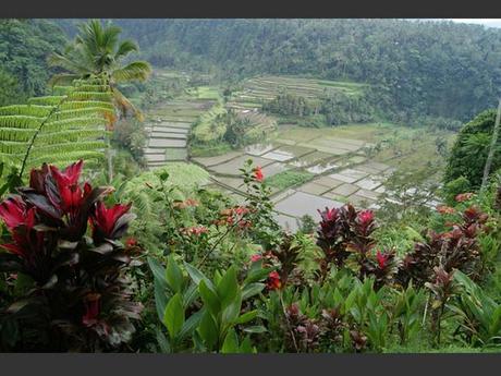 Les rizières au pied du volcan Gunung Agung à Bali, en Indonésie.