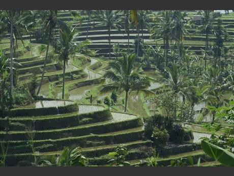 Les rizières de Jatiluwih à Bali, en Indonésie.