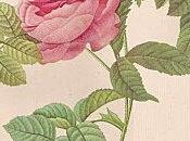 Mignonne, allons voir rose