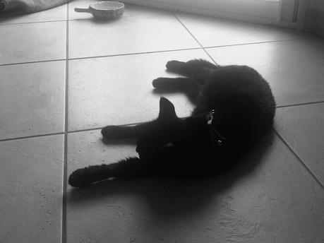 My lovely Kitty Cat