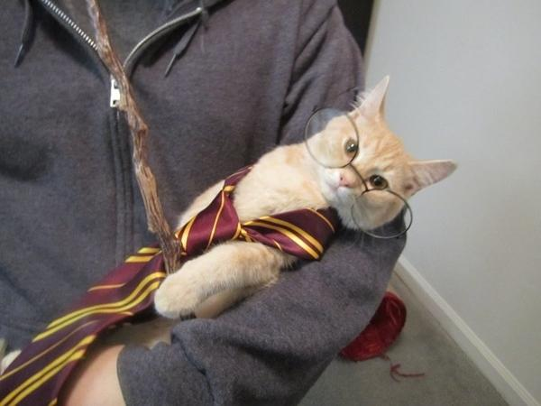 photo humour insolite chat harry potter lunettes