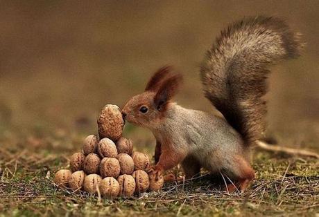 photo humour insolite écureuil pyramide noix