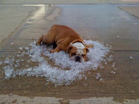 photo humour insolite chien chaud glaçon