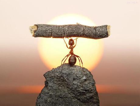 photo humour insolite fourmi haltères bout bois