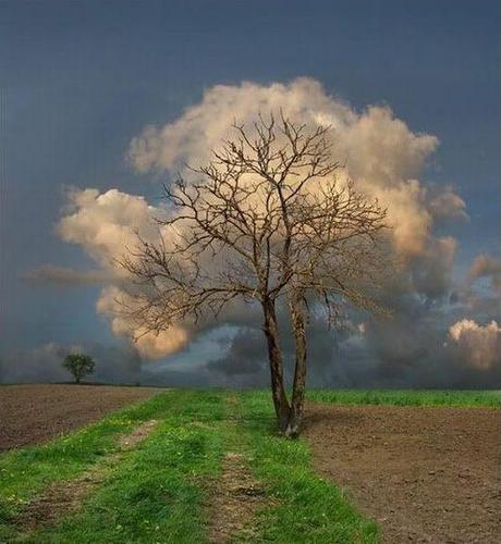 photo humour insolite arbre nuage