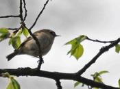petit oiseau très tient place