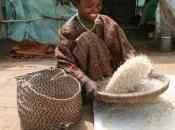 CORNE l'AFRIQUE: millions personnes affectées faim ONU-
