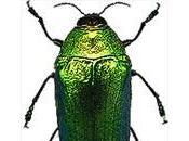 coléoptères dans l'art