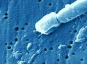 Klebsiella pneumoniae: souche ultrarésistante mais mortelle Clinical Infectious Diseases