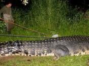crocodile géant capturé vivant philippines