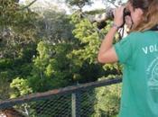 Protéger forêts comme écovolontaire
