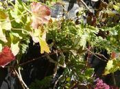 photos septembre 2011 végétation d'automne s'installe sous journées bien ensoleillées
