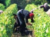 chine sait deja, bientôt vente beaujolais nouveau.