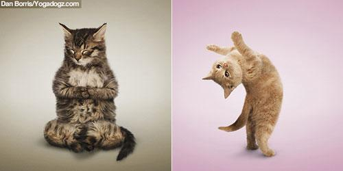 yoga des chats photos