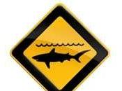 mise mort requins