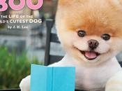 Good as... Boo, chien plus mignon monde