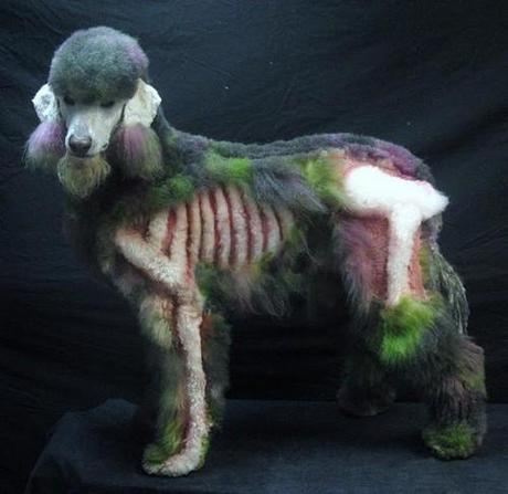 zombie caniche Un caniche zombie pour Halloween ?