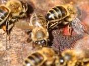 ANTIBIOTIQUES PESTICIDES: interaction mortelle pour abeilles, humains? PLoS