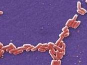 ALLERGIES: Affronter bactéries pour mieux prévenir University Copenhagen