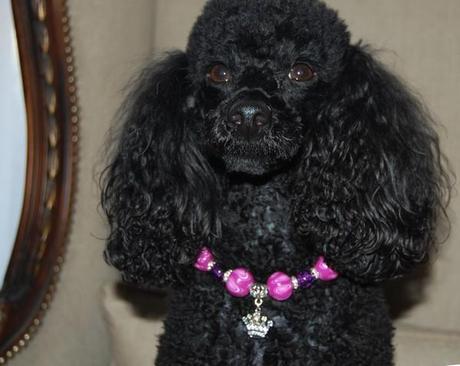 collier perles chien