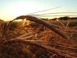 Jeunes Agriculteurs de Bretagne. « On a besoin du foncier pour nourrir la population »