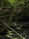 Les forêts françaises devront s'adapter au réchauffement climatique