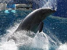 Photographies dauphins