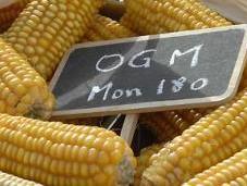 maïs réhabilité conseil d'Etat