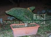 Galerie photos: jardin importé Mohamed Zine Abidine