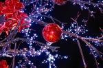 Bientôt Noël, voici quelques manières de le fêter de manière plus écologique