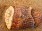 chaussette coquillage autres animaux plage