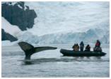 Reprise critiquée pêche baleine Japon