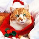 thumbs animaux de noel 023 Animaux de Noel (30 photos)