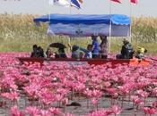 Thaïlande: ROSE [HD] DIAPO