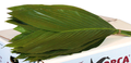 Cocos, Prêle, Aspidistras, Galax feuillages très utilisés fleuristes