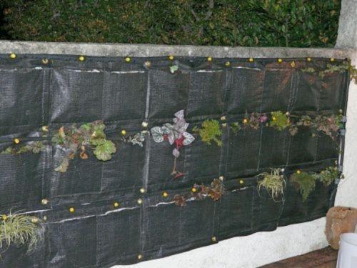 Er Anniversaire Pour Notre Mur Vgtal Filtrant    Paperblog