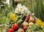 "menu aujourd'hui ""petit guide vert bio-alimentation"