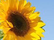 Here comes l'énergie solaire inspirée nature