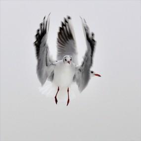 photo irène amrhein 285x285 Concours de photo nature Frisson dHiver : les résultats !