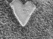 Martiens cœurs