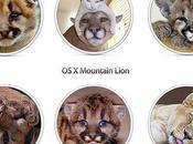 Mountain Lion (Puma), photos rejetées...