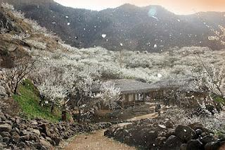 Comment le printemps arrive en Corée I