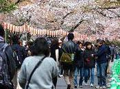 Hanami, fête cerisiers fleurs Japon