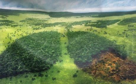 Forêts moscovites en danger ?