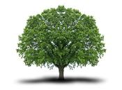 Petits gestes écolos pour million d'arbres