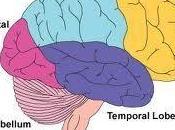 """Journée d'étude """"Les usages sociaux sciences cerveau"""" 2012"""